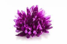 Chryzantéma - tm. fialová