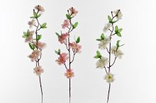 Jabloň květ
