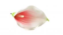 Kala pěnová - sv. růžová