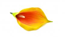 Kala pěnová - žlutá