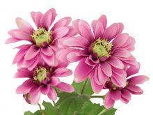 Kopretina - umělá květina