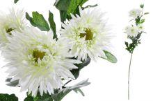 Chryzantéma x6 - krémová