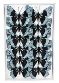 Dekorační motýl - velký