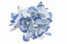 Hortenzie vazbová - modrá