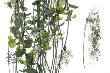 Převis eukalyptus
