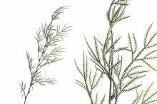 Větvička zeleň - ojíněná
