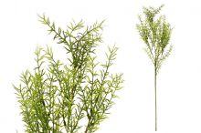 Asparagus - větvička