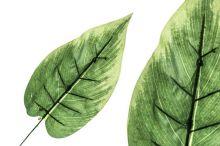 List - zeleň