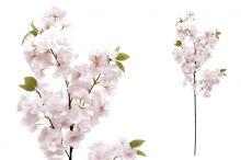 Třešňové květy - růžová