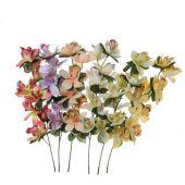 Orchidej - MIX