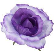 Růže - fialovo-bílá