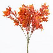 Trs javor - oranžová