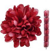Chryzantéma - bordó